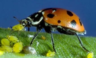 Example of Biological control